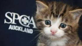 Saturday 1st April 2017 - SPCA - Jump to the Rescue