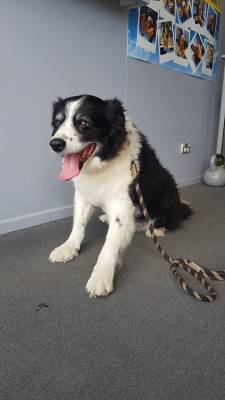 Skydive Auckland's Rescue Dog - Meet Mac